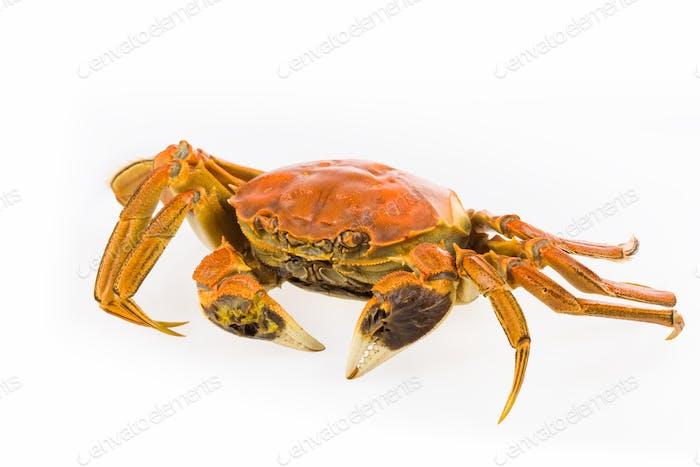 delicious cooked crab closeup
