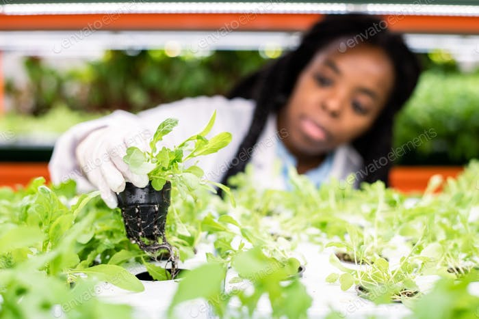 Hand of gloved female worker of greenhouse putting green seedling on shelf