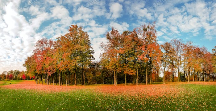Leaf fall on green grass in autumn park, panorama