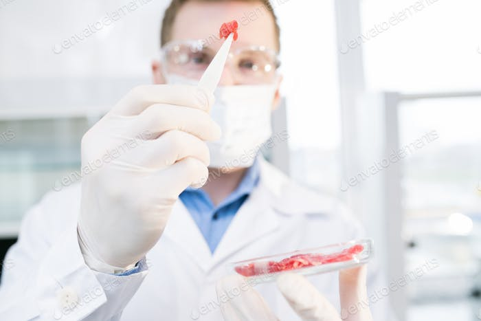 Scientist holding meat sample