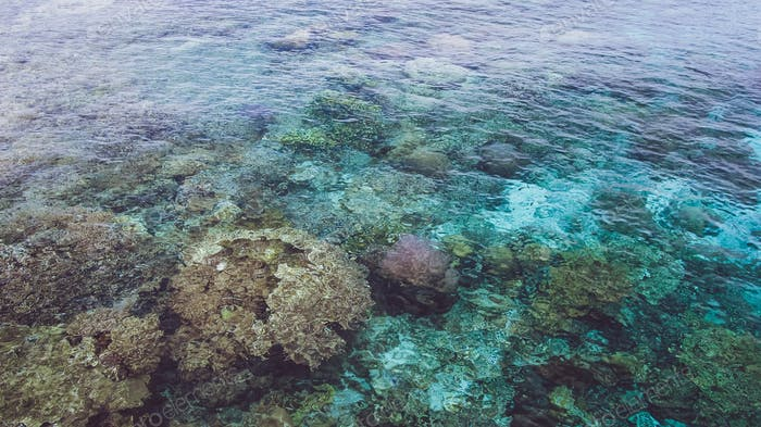 Beautiful colorful corals visible in transparent crystal clear ocean water near Mansuar island in