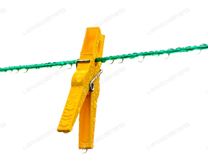 Wet yellow clothespin on a washing line