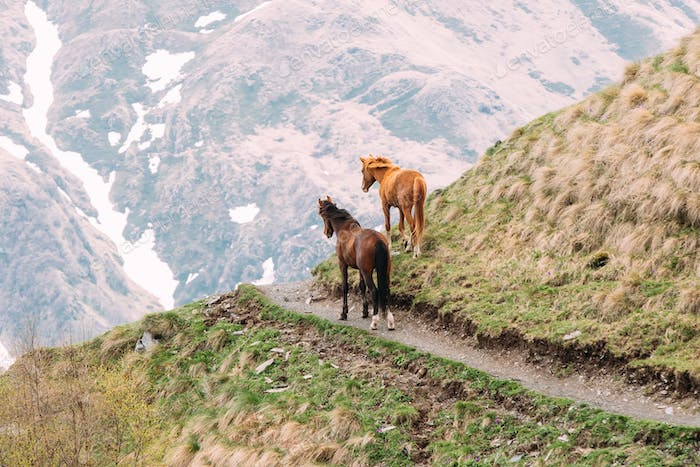 Two Horses Grazing On Green Mountain Slope In Spring In Mountain