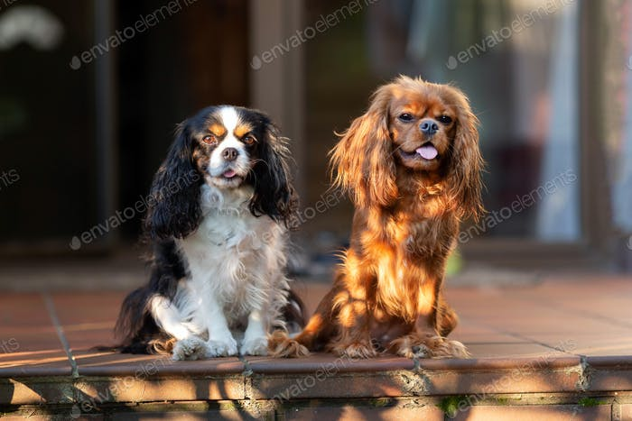Two dogs sitting in sunset light