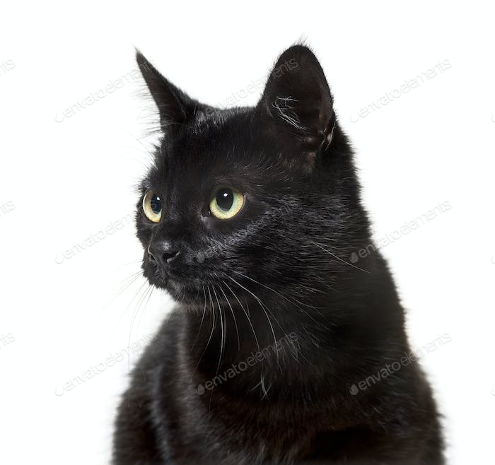 Mixed-breed cat against white background