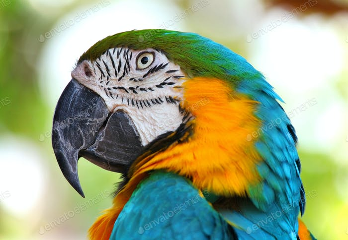 coloured Macaw parrot