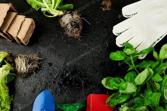 Flaches Layout von Gartenwerkzeugen, Basilikum, Öko-Blumentopf, Erde auf schwarzem Hintergrund.