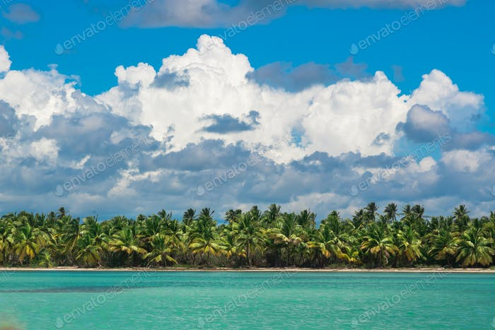 Palm trees on sea shore at beautiful sunny day