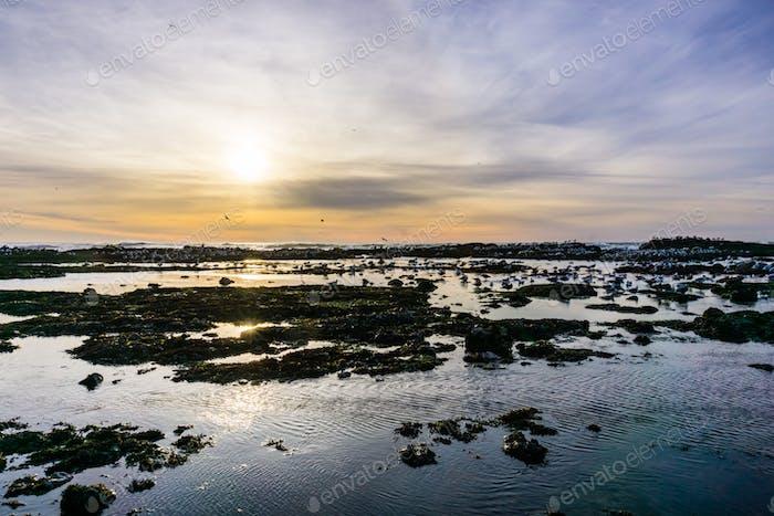 Sunset at the Fitzgerald Marine Reserve tidepools, Moss Beach, California
