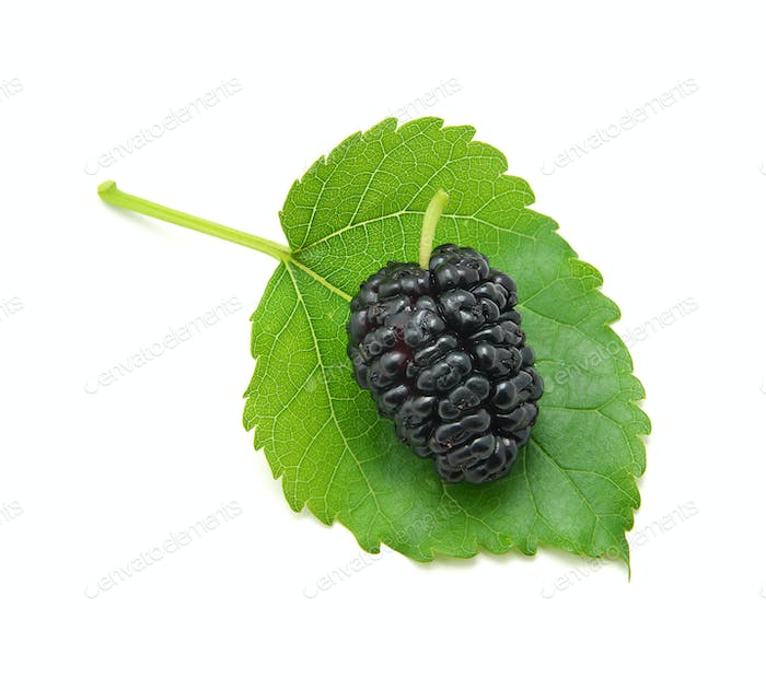 Mulberry isolated