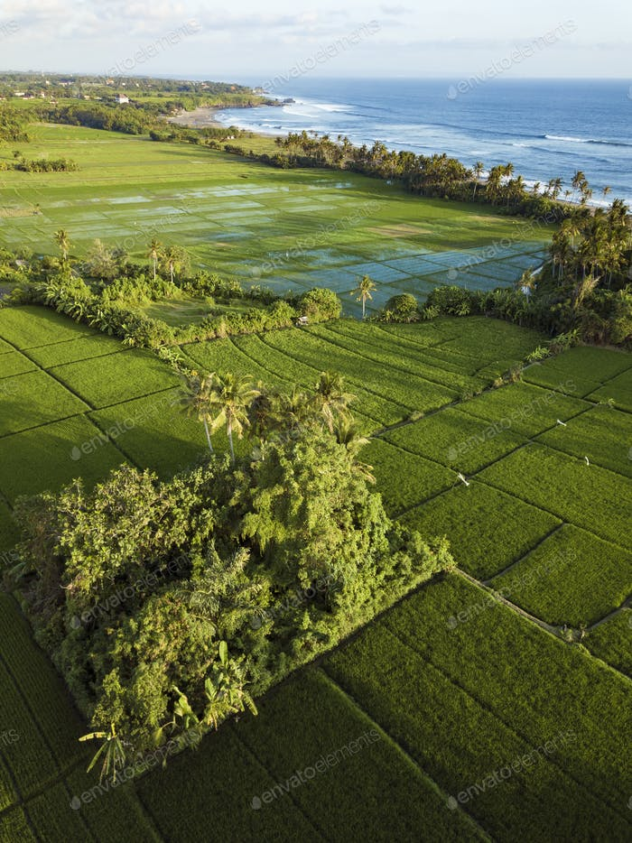 Rice fields,Bali,Indonesia