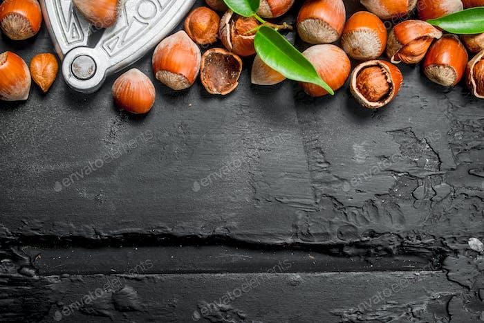 Hazelnuts in a shell with a Nutcracker.