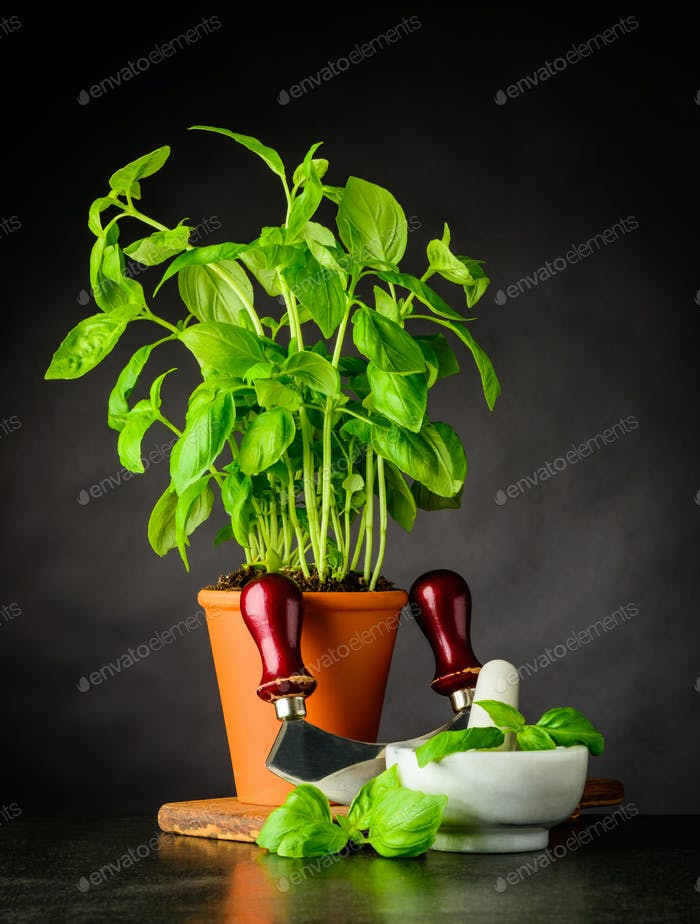 Basil Herb with Herb Chopper