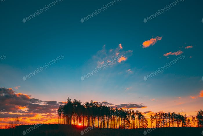 Sunset Sunrise In Pine Forest. Sun Sunshine In Sunny Coniferous Forest.