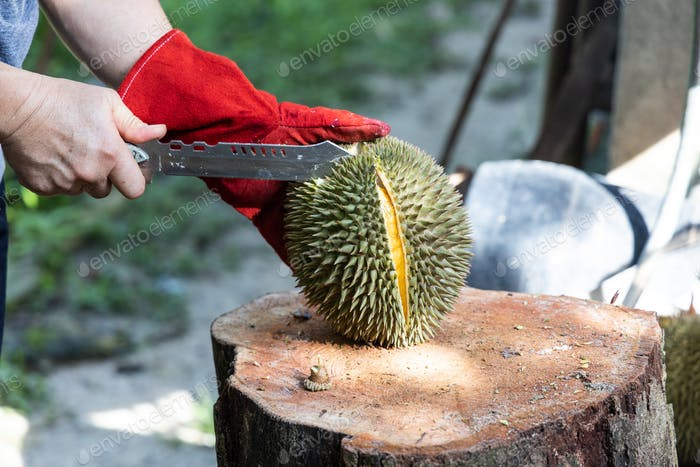 Series of person cutting open organic durian with knife