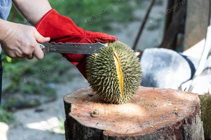 Serie von Personen, die organische Durian mit Messer schneiden
