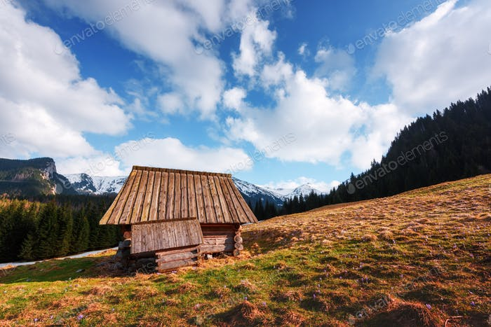 Old wooden hut in spring High Tatras