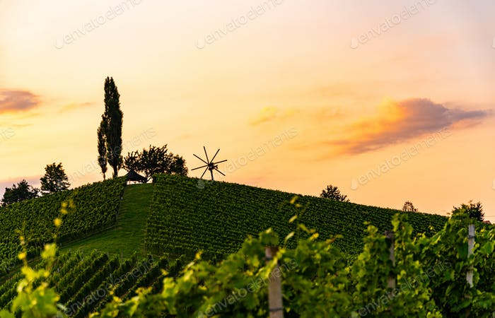 Wine country Vineyards in Austria, south Styria. Landscape sunset. Grape hill with windmill