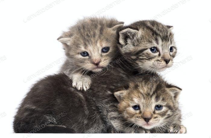 Kittens lying on each other against white background