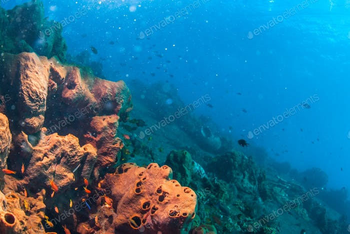 Underwater coral, fish, and plants in Bali