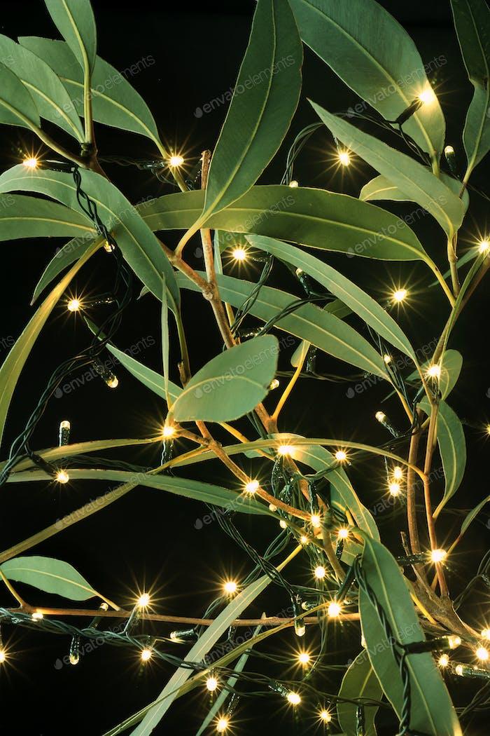 Fairy Lights and Gum Tree Leaves