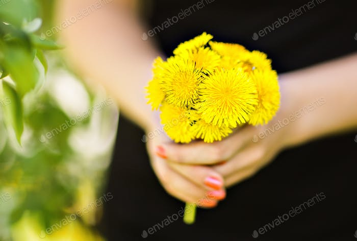 small bouquet of  dandelions