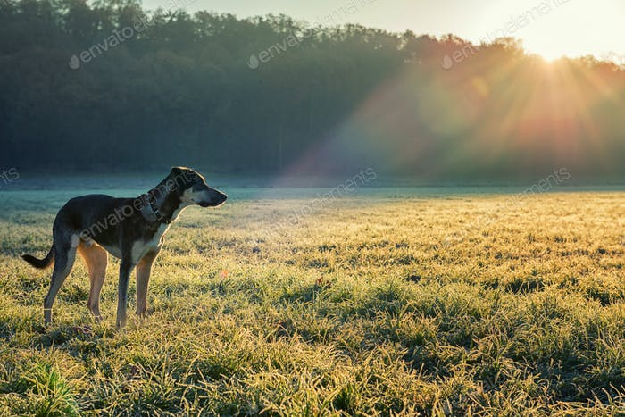 Dog in winter morning