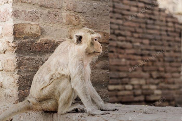 Monkey are sitting on brick