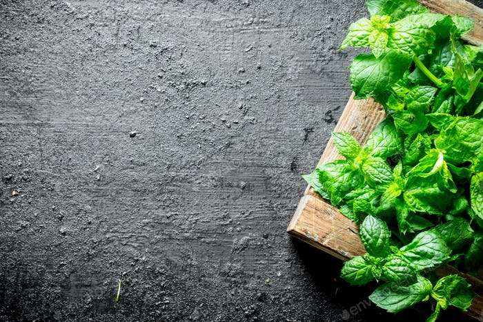 Fresh mint on wooden tray.