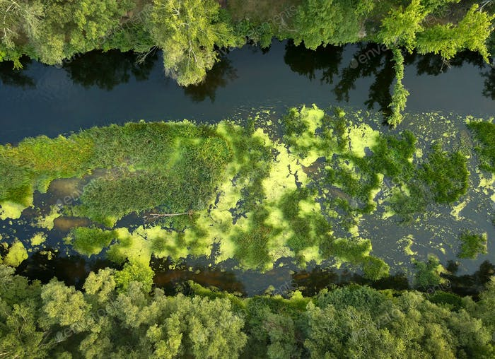 Top view of the river, marshland and trees on the riverbanks