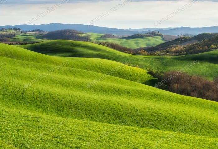 Spring fields in Tuscany