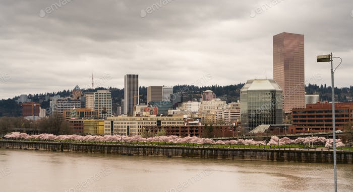 Downtown City Skyline Portland Oregon Willamette River Spring Blooms