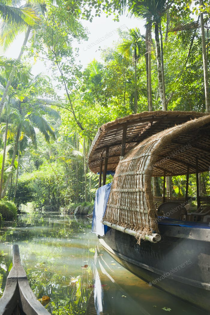 Boat in the Jungle