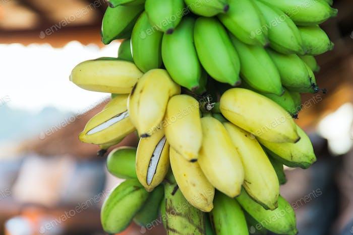 close up of green bananas at street market