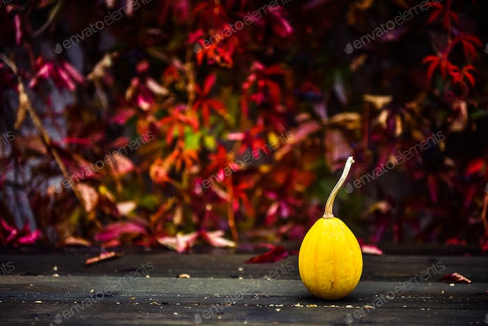 Thanksgiving concept. Autumn yellow pumpkin on a wooden table. Red ivy in the background