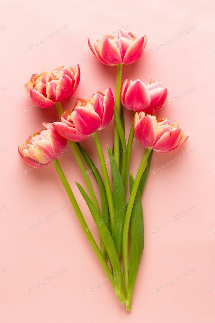 Tulpen auf Pastellfarben Hintergrund.