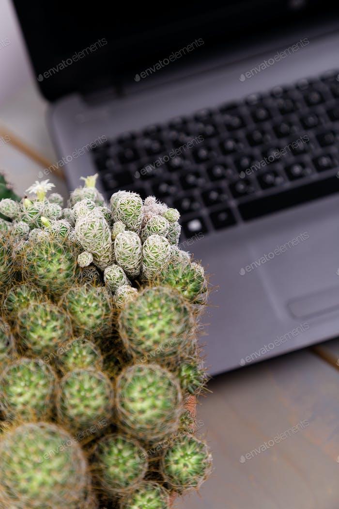 Flache Lay von Kaktus und Laptop Computer