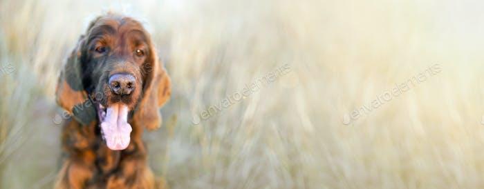 Забавный нос собаки