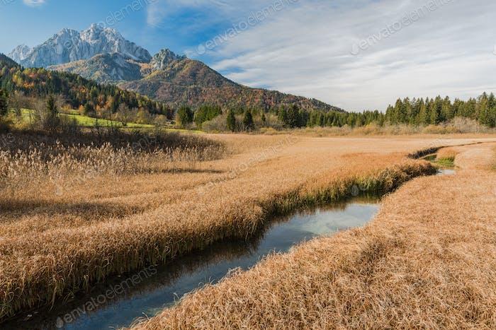 Beautiful sunny day at Zelenci, yellow fall grassland,Slovenia