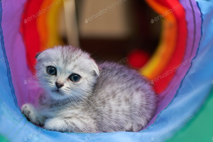 The innocence gray kitten in the vivid tunnel