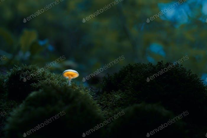 Glowing mushroom in dark forest