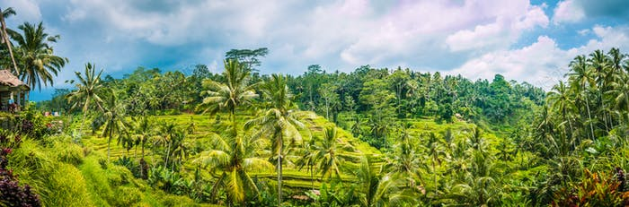 Wide shot of amazing Tegalalang Rice Terrace field covered with coconut palm trees and cloudy sky