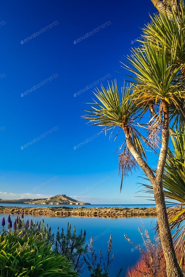 Cabbage tree growing above the beach