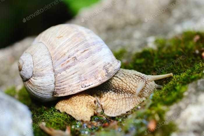 Snail crawling on the moss. Selective focus