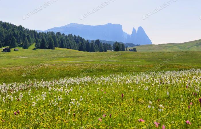 Blick auf die Berge von Seiser Alm oder Seiser Alm, Dolomiten Alpen, Italien