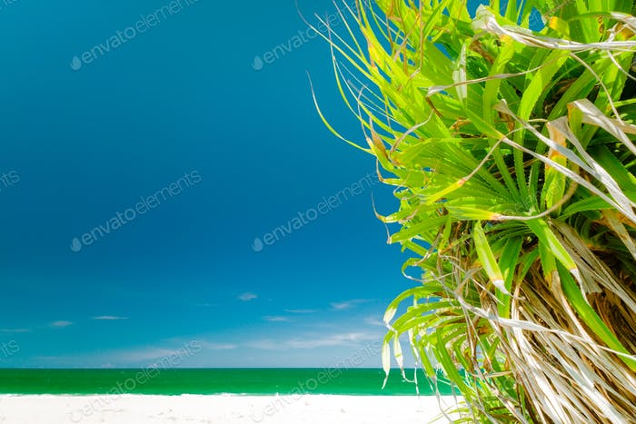Increíble vista Relajante del Horizontal tropical