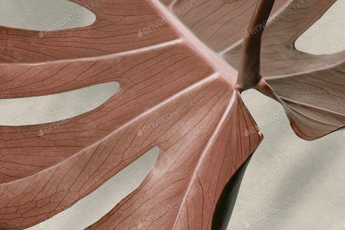 Copper monstera leaf design resource