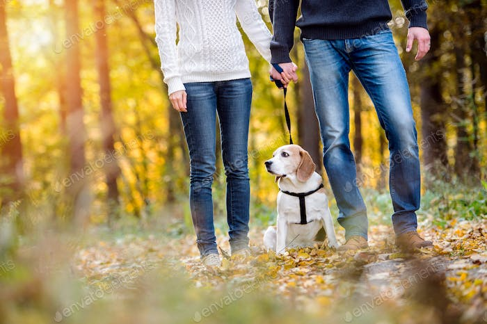 Beautiful young couple walking a dog in autumn forest