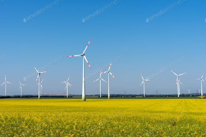 Wind power plants in a blooming rapeseed field