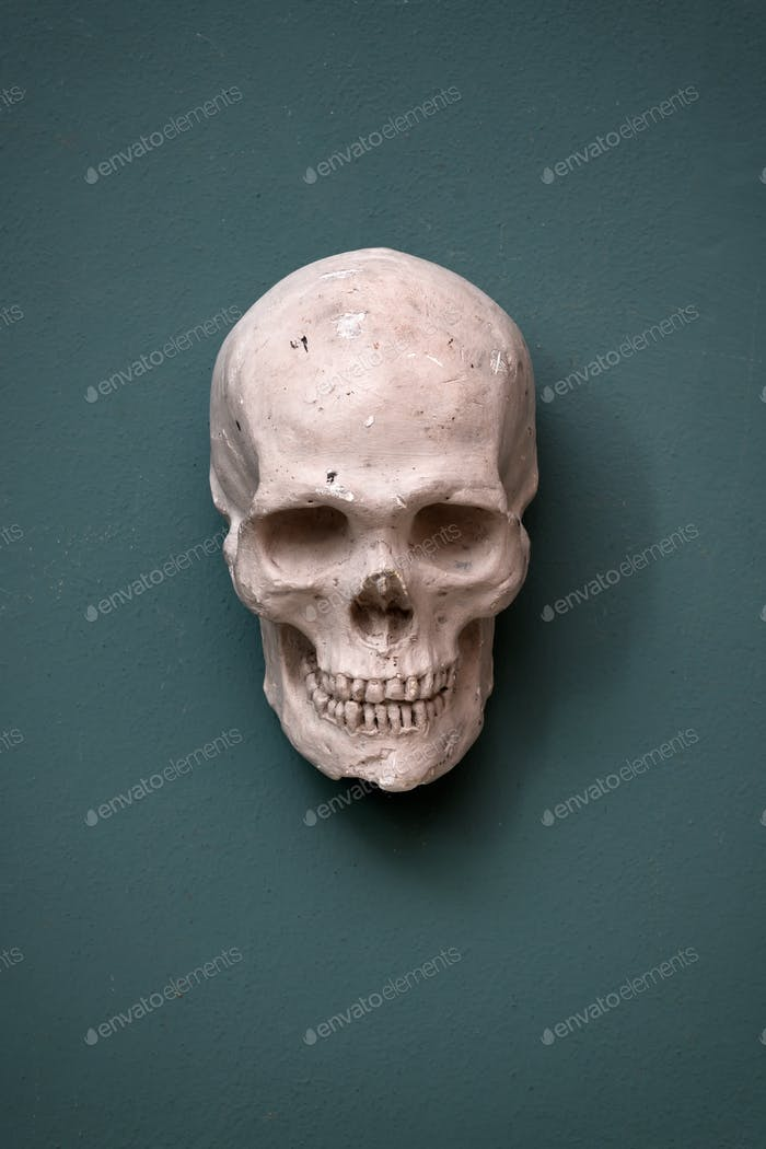 Replica of a human skull hanging on a wall